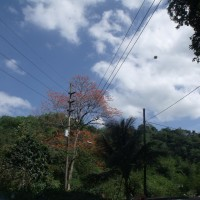 Flying saucer Trinidad Tobago 2010 UFO2 200x200 UFOs on Camera   Gallery 2