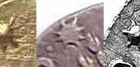 Pertinax X7 200x96 Ancient Aliens Gallery 1