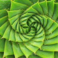 Spiral aloe1 200x200 Ancient Spirals