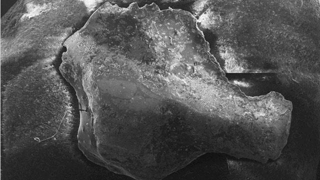 Electron Microscope Alien Implant Alien Implants Best Evidence
